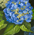 Hydrangea Flower by Laura Mason