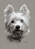 Westie I:  Sooo . . . What's Up? by Lynda McMorris
