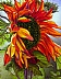 Red Sunflower by Kathy Mann