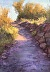 Cave Creek Trail by Peggy Orbon