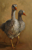Duck Duck Goose by kitty brumberg