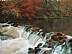 River In Fall by Tom Saxe