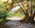 Sycamores in a Dry Creek by David Forks
