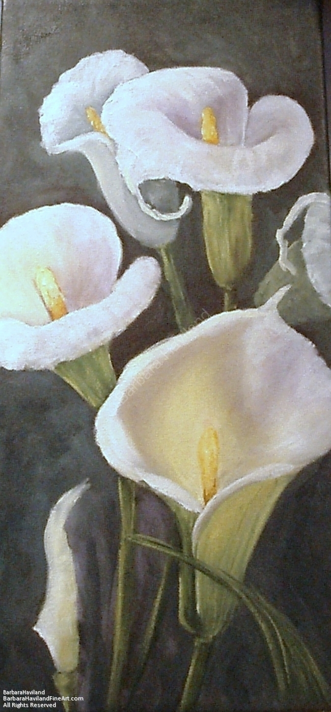 Calla Lilies, Floral,flowers,oil painting,Barbara Haviland ...