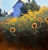 Sunflowers Looking East by Romona Youngquist