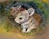 Young Bunnies by Sandra Orris