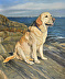 Portrait of Maggie the Yellow Lab by Phyllis Tarlow Portraits
