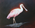 Roseate Spoonbill by Kathleen Wiley