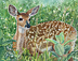 Spring Fawn by Deb Watson