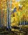 Colorado Aspen 30x24 by Rhonda McCay