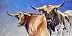 Rough and Ready (Texas Longhorn Cattle) by Nancy Rynes