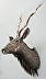 kudu by Neal Hedges