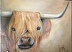 heilan coo by janet checker