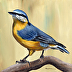 Nuthatch by Janet Graham