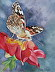 Painted Lady by Judy Haller-D'Angelo