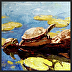 A Two Turtle Day by Dianna Shyne