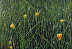 Bokeh - Yellow Flowers in Tall Grass by Grant Ham