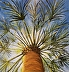 Palm Tree by Jo Allebach