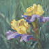 Outside The Ordinary_Iris by Jennifer Riefenberg