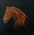 Aspen, Portrait of a Mustang Mare by Vicki Duron