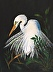 Great Egret with Full Plumage � by Joan Eure