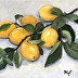 Lemons From My Tree by Kim Peterson