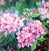 Rhododendron by Eileen O'Keeffe