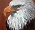 Bald Eagle by Karen Carter