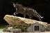 UPB  Pitt Panther by  Hodges Fine Art