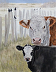 Hereford with Baldy and birds by Denise Rich