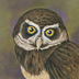 Spectacled Owl by Mindy Lighthipe