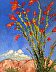 Ocotillo by Thomas Mann