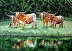 TEXAS  LONGHORNS by Michele Ottmann