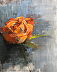 Bloom 1, Rosa 'Orange Crush' by Jessica Armstrong