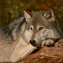 """Day Dreamin' "", grey wolf, Canvas Gicl�e Print by Kathleen Cencula"