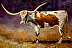 Canyon Springs Longhorn by Cindy Nowotny