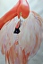 Fifty Shades of Flamingo by Claire Osborne
