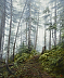 Forest Bathing by Mary Graham