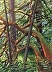 Sun Dappled Arbutus by Jeanne Urban
