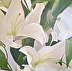 Lovely Lilies by Linda Williams