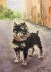 """""""Norma's Dog Chester"""" by Joan Meyer"""