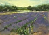 Lavender at Les Baux (SOLD) by Catherine Crumpton
