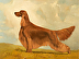 Piper - Irish Setter Best of Breed Westminster by CONSTANCE PAYNE STUDIO