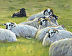 Lambscape with Dublin by Sibyl Johnson