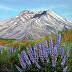 Mount St. Helens & Lupines Study by Marie C. Wise