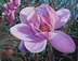 Tulip Magnolia by Marie Wise