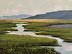 Summer Marshes by Maggie Ganly