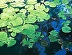 Water Lilies by Janet Johnson