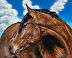 HorseAGBay_16x20_web by Kathleen Peabody Mittan
