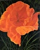 Homage to Georgia with California Poppy by Linda Elling